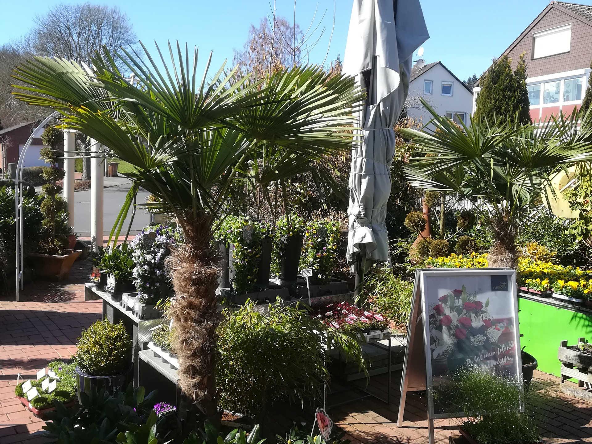 Blumen Lounge Blumen und Pflanzen