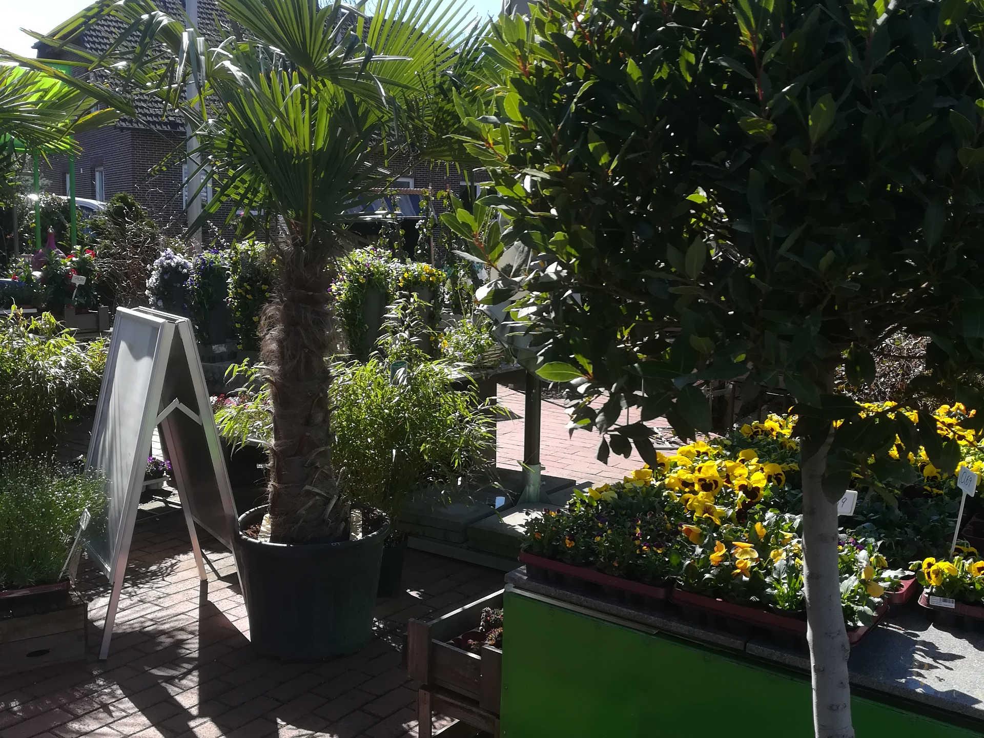 Blumen Lounge Pflanzen